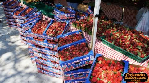 Orlando's Farmers Market at Lake Eola.