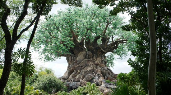 The Tree of Life is just as stunning when viewed from the backside.