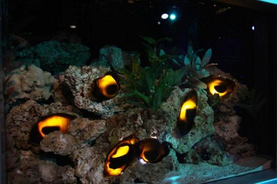 SeaWorld Orlando Shark Encounter.