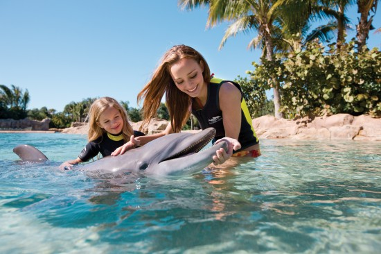 Swim with dolphins at SeaWorld Orlando's Discovery Cove.