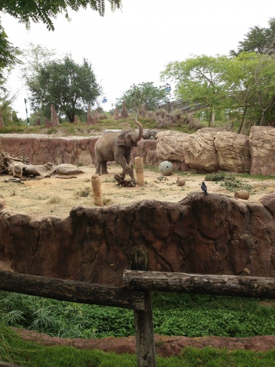 Busch Gardens Tampa How To Ride Every Major Ride And See