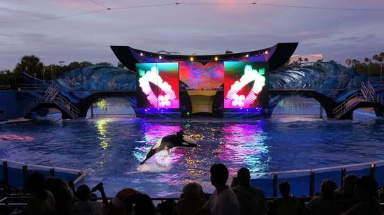 SeaWorld Orlando Summer Nights: Shamu Rocks.
