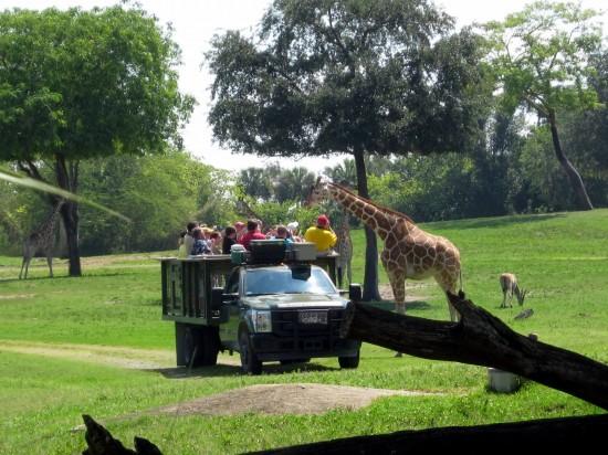 Animal encounters at Busch Gardens Tampa Bay.