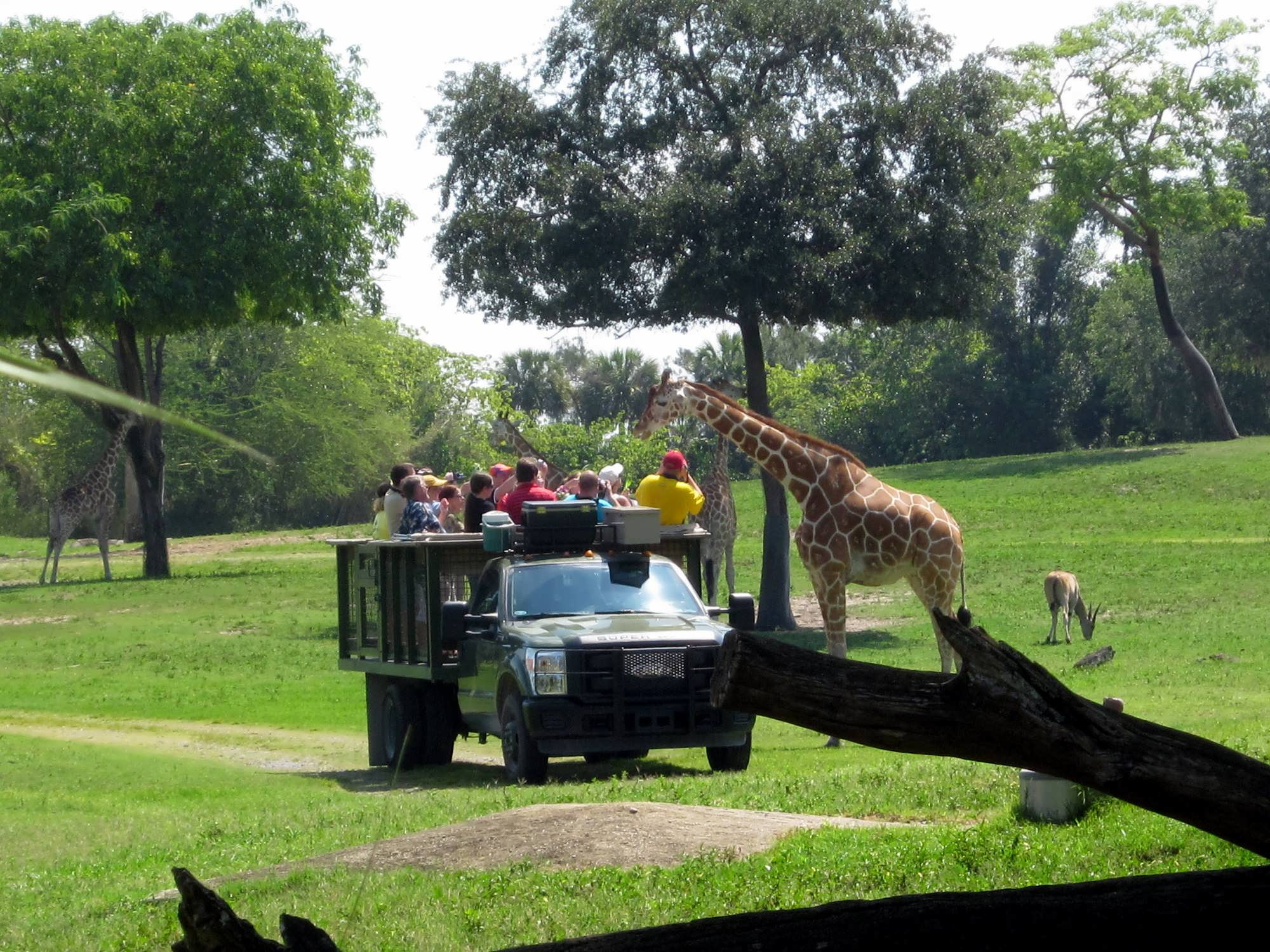 Tampa Bay Exhibits Busch Gardens Tampa Bay