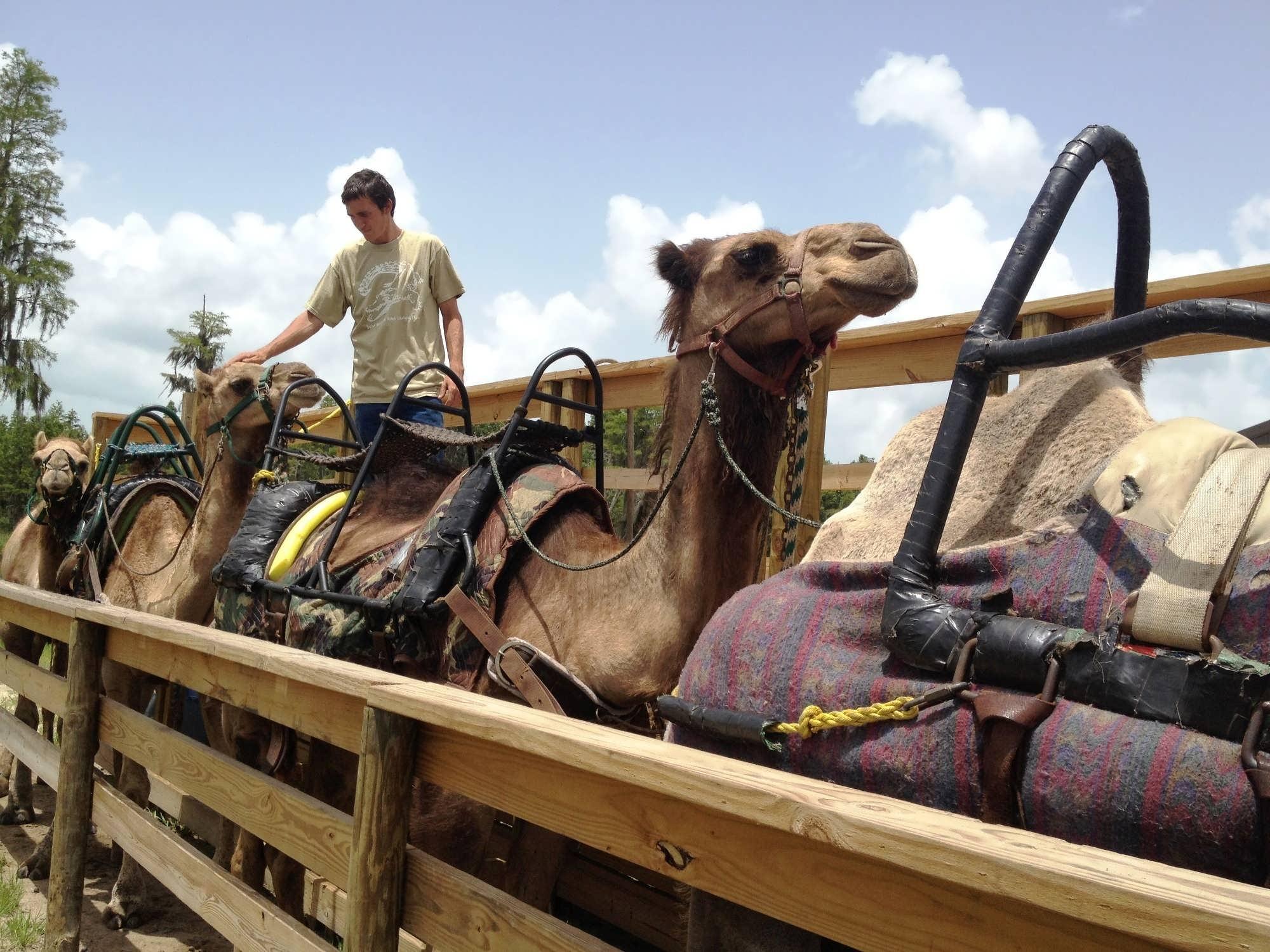 Safari Wilderness Ranch: Fun animal encounters off the beaten path ...
