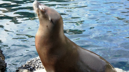 A sea lion bathes in the sun at SeaWorld.