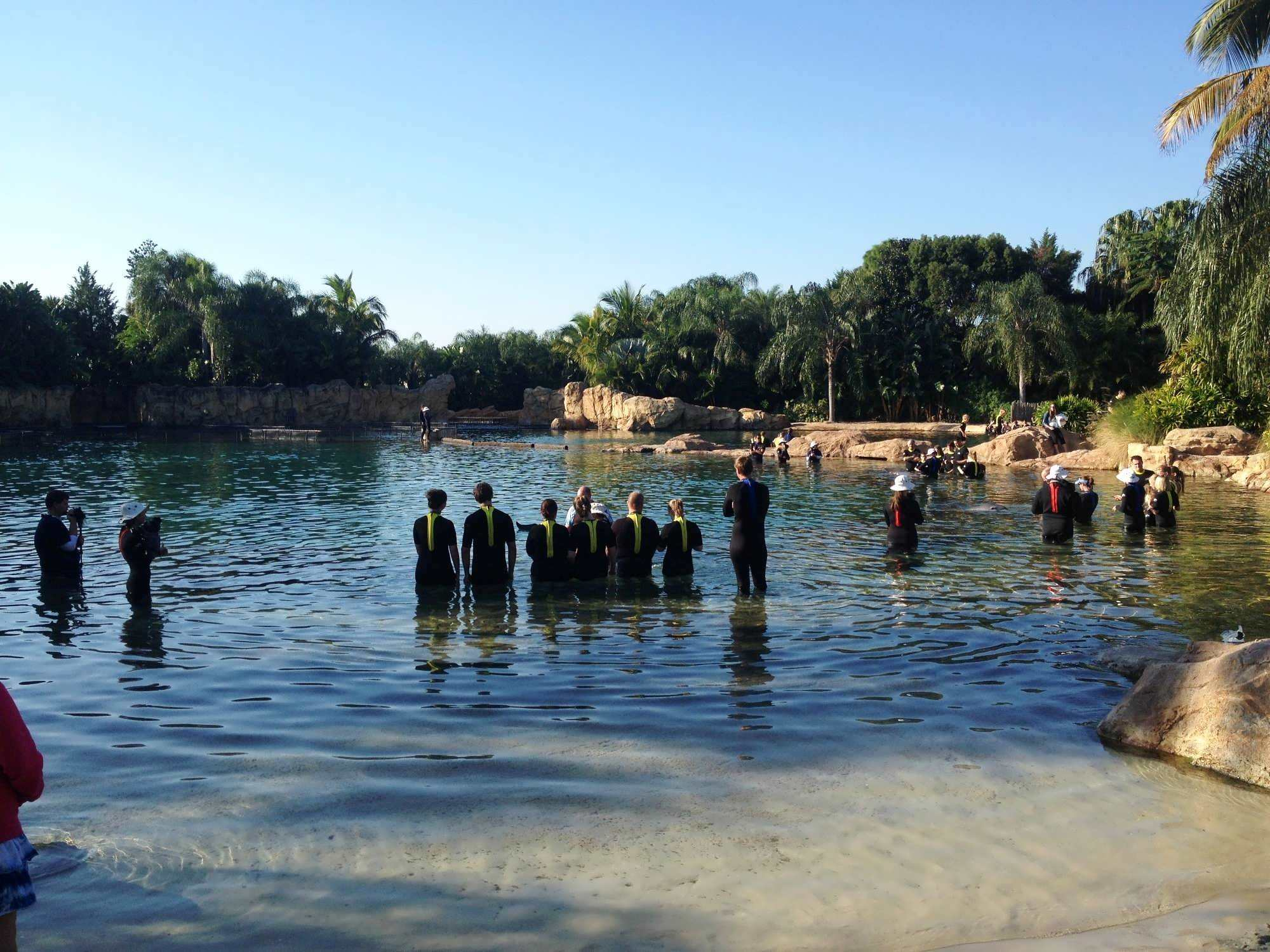 Discovery Cove At Seaworld Orlando A Review Of My