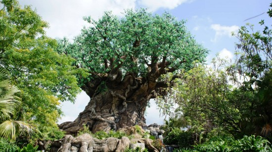 Tree of Life at Disney's Animal Kingdom.
