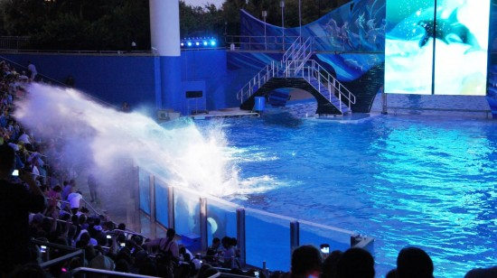 SeaWorld Orlando Summer Nights: Shamu Rocks.