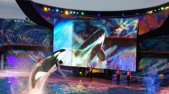 SeaWorld Orlando - December 2013.