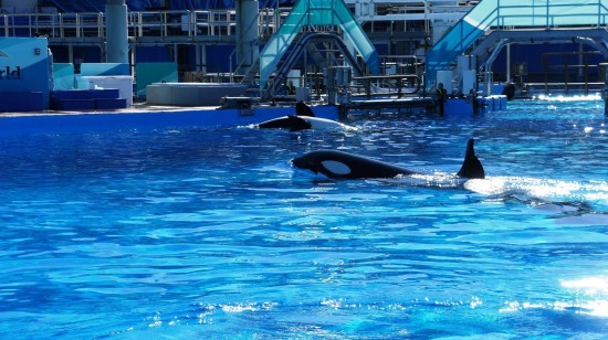 SeaWorld Orlando - January 2014.