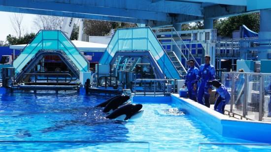 SeaWorld Orlando – February 2014.