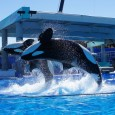 SeaWorld Orlando trip report – February 2014 (Bands, Brew & BBQ, Larry the Cable Guy, Shamu Up Close)