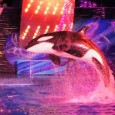 SeaWorld Orlando Summer Nights 2014: New shows and experiences keep the energy up after dark