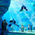 SeaWorld announces Blue World Project as it fights to define its future