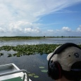 Orlando Airboat Tours: Leave the theme parks for a real Florida adventure