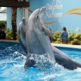 SeaWorld Orlando trip report – September 2014 (new free wifi, Clyde and Seamore refurb, dolphin training, and more)