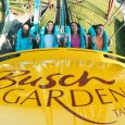 A dozen reasons why I love Busch Gardens Tampa