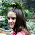 Busch Gardens Tampa insider tips: Tour, drink, and cool off like you never have before