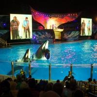 SeaWorld Orlando - November 2014.