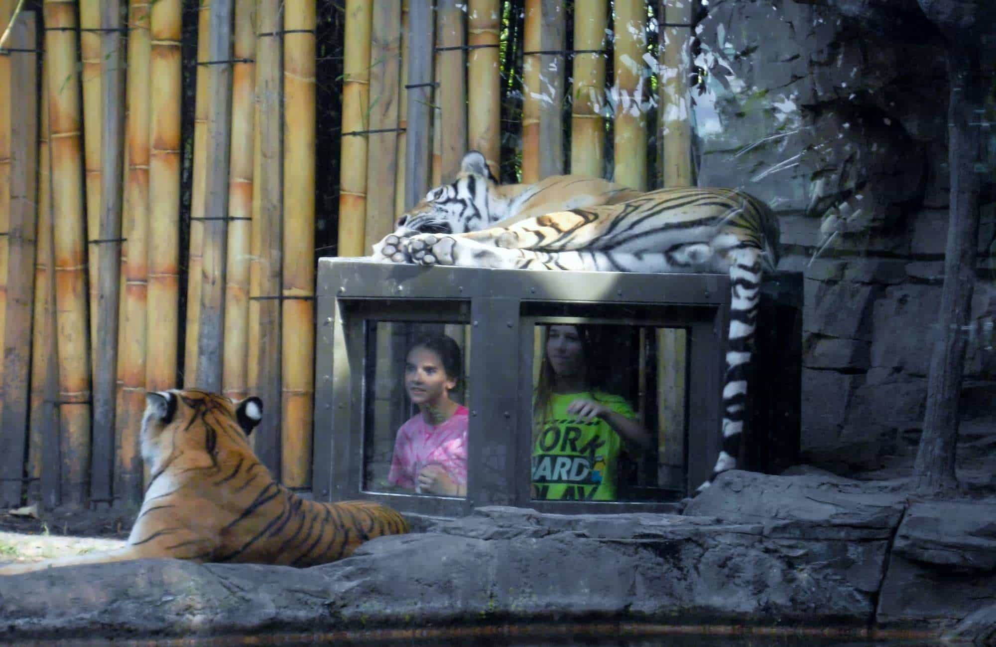 Top 5 animal encounters at Busch Gardens Tampa