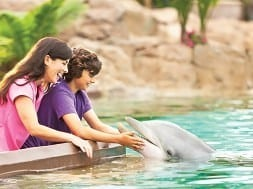 Dolphin touch_mom & son