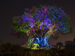 Tree of Life at Disney's Animal Kingdom