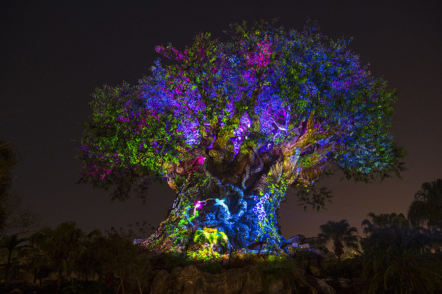 RUMOR: Tree of Life Awakenings at Disney's Animal Kingdom to expand