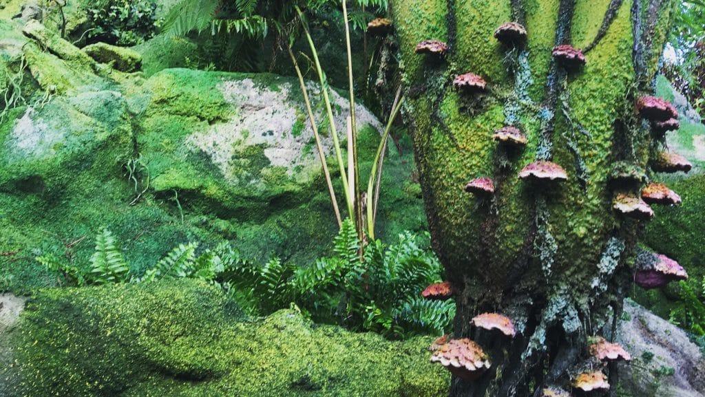 The beautiful alien plants in Pandora: The World of Avatar