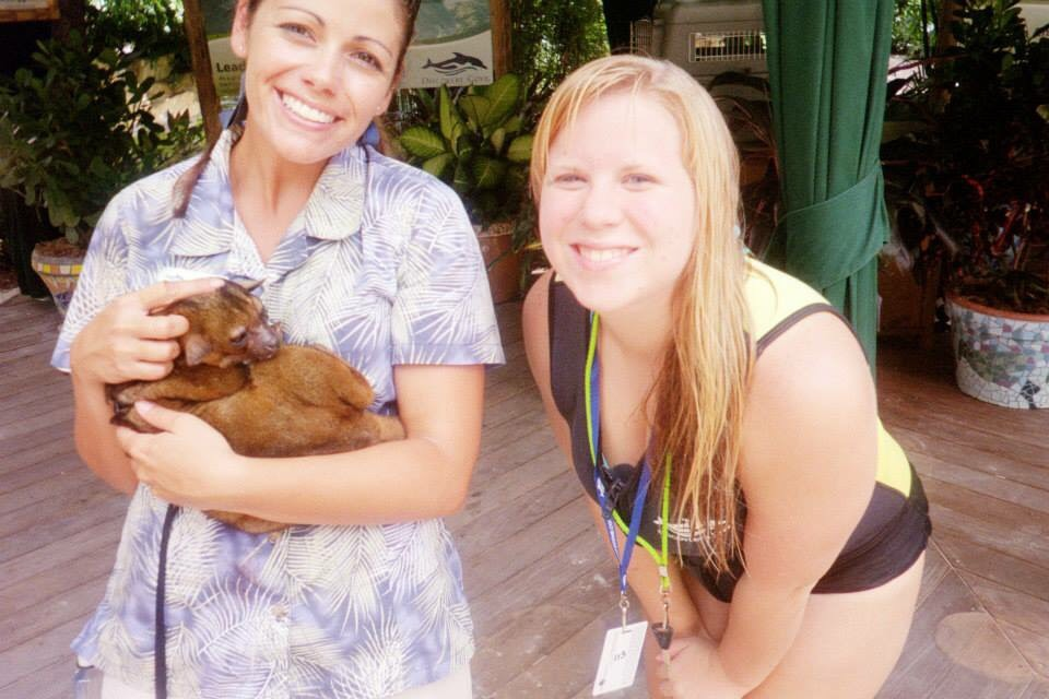 Kinkajou animal encounter at Discovery Cove
