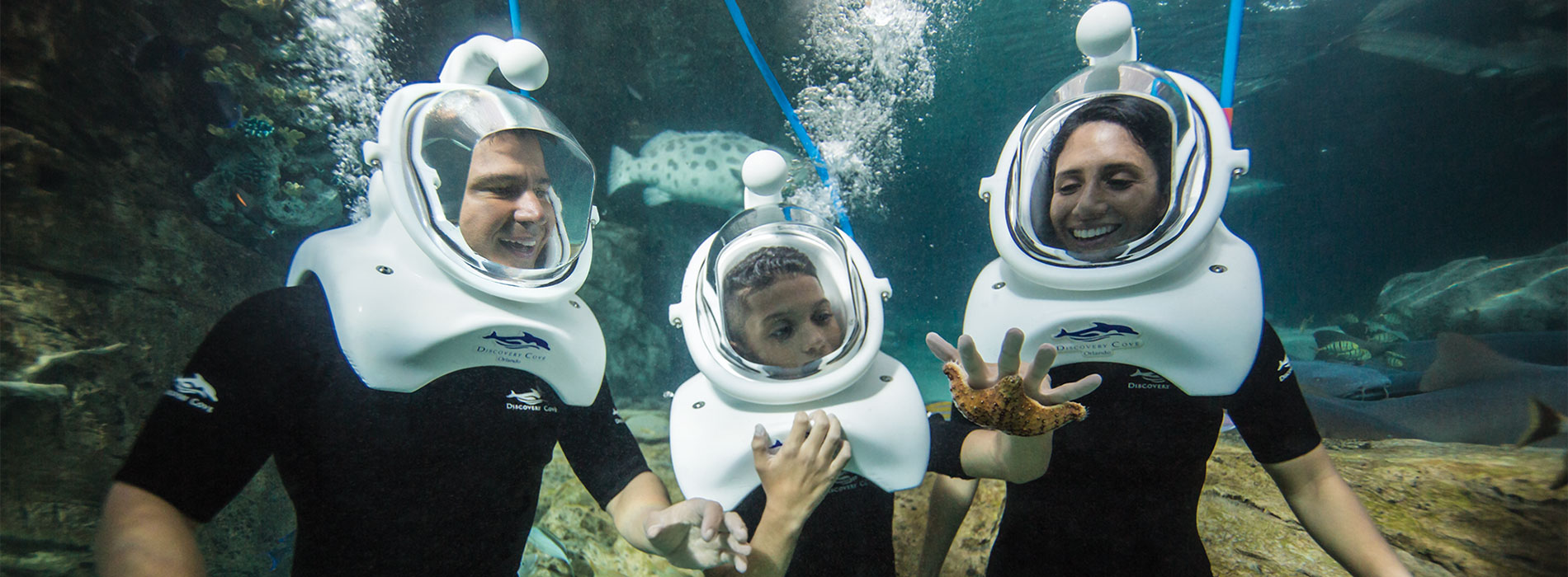 6 top tips for making the most of Discovery Cove