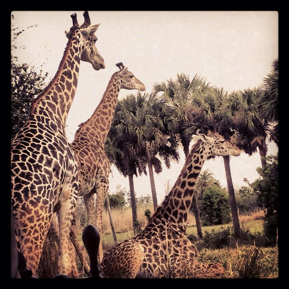 Wildlife at Disney's Animal Kingdom