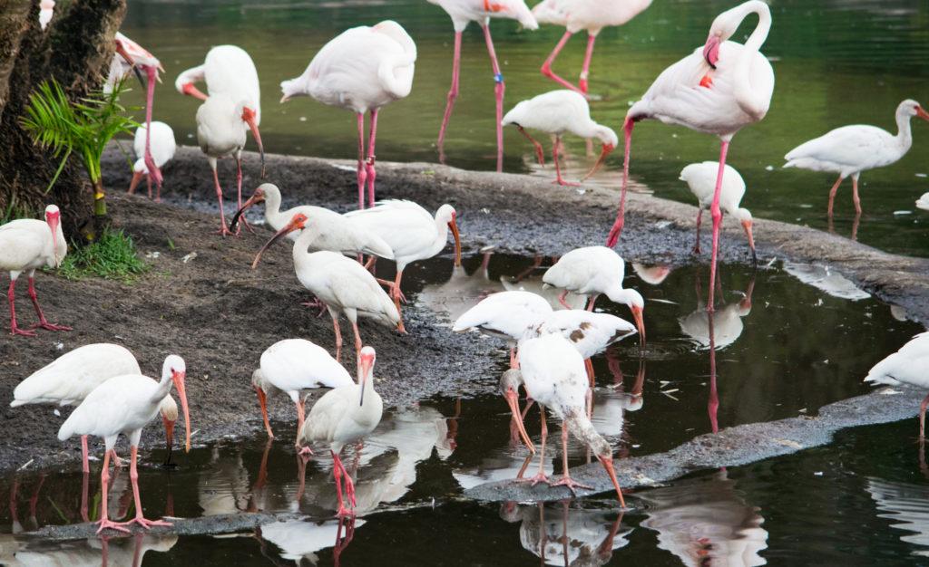 Flamingos in Harambe Wildlife Reserve
