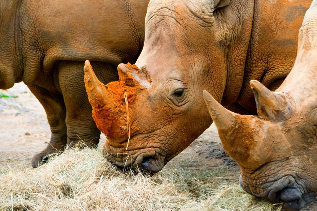 Rhinos in Harambe Wildlife Reserve