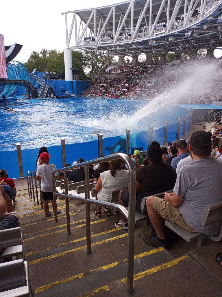 Orca splash zone at SeaWorld Orlando