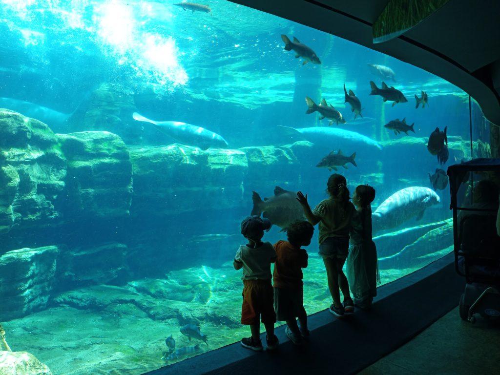 Underwater manatee viewing area at SeaWorld Orlando