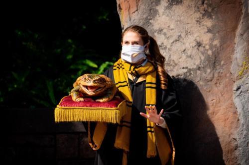 Holiday Frog Choir 2020