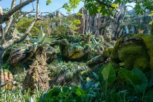 Avatar Flight of Passage in Pandora at Disney World's Animal Kingdom